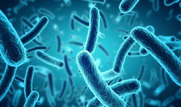 Pesquisa mostra que limpeza em hospital não extermina bactérias